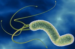 H. pylori ayurvedic treatment at Ojus Health Melbourne